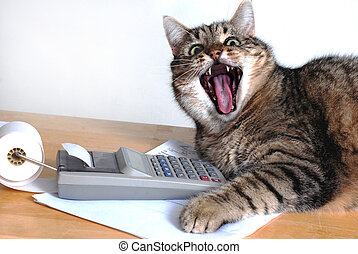 Funny cat with open mouth near calculator.
