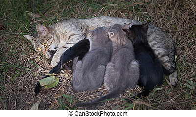 Cat Nursing her Kittens. motherhood