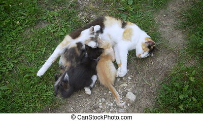 Cat nursing her little kittens