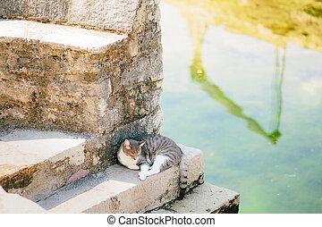 Cat of the sea. Perast, Montenegro.