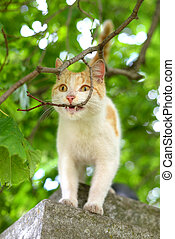 Cat on a background of blurred foliage,