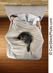 Cat on a Bed