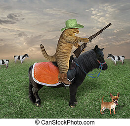 Cat on a black horse grazes cows