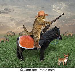 Cat on a black horse grazes sheep