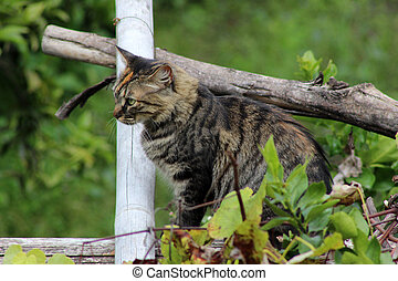 Cat on a Fence Post