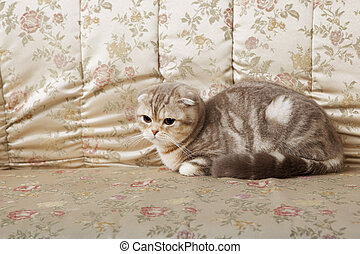 Image of a beautiful fluffy cat on a gold couch