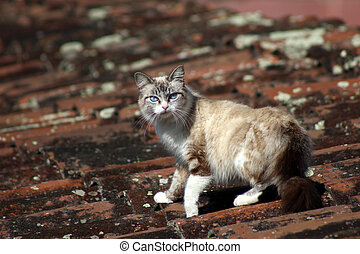 Cat on a Roof