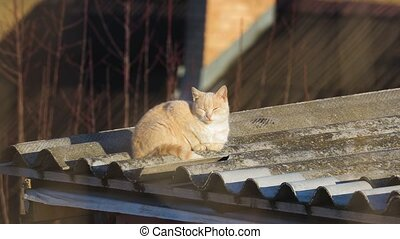 Cat on a roof - Cat being lazy on a roof in the sunlight