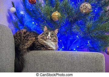 cat on a sofa near the Christmas tree