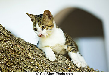 Cat on a tree branch in danger situation