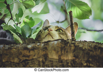cat on a tree in the garden