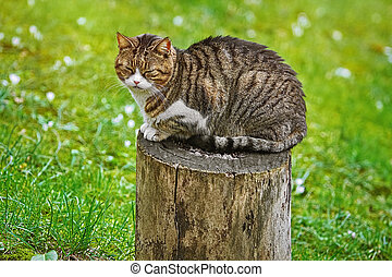 Cat on a Tree Stump