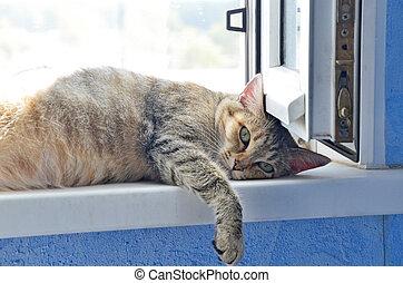 Cat on a window sill - Cat lying on a window sill