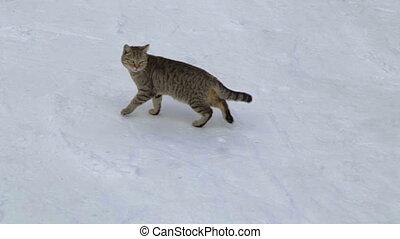 Cat on a winter walk