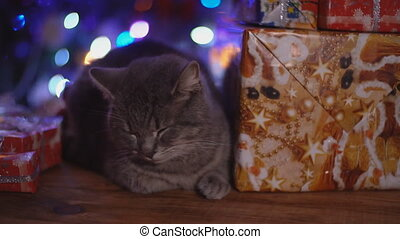 cat on a wooden table against the background of a glowing Christmas tree