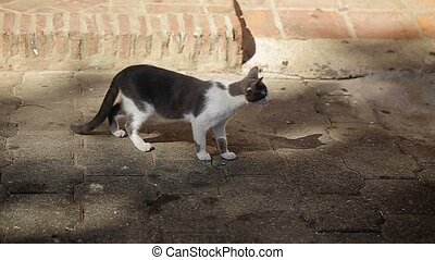 Cat on city street at sunny day