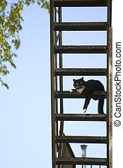 Cat on Fire Escape