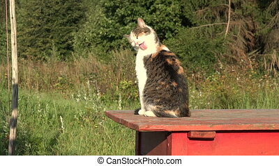 Cat on  red table licking its fur