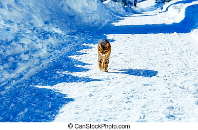 Cat on road in mountain winter landscape. Eye contact.