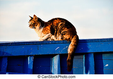 cat on roof, photo as background