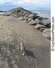Cat on sandy beach