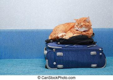 Cat On Suitcase