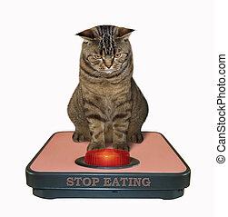 Cat on the bathroom scale 2
