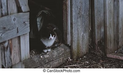 Cat on the farm