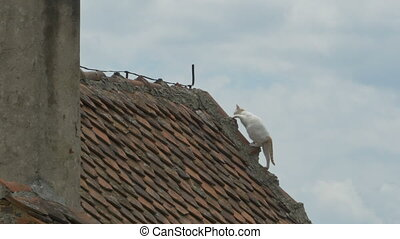 Cat on the House - A cat is hiking on the top of a nouse.