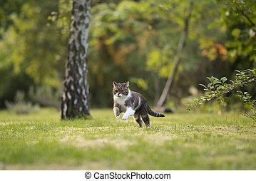 Cat on the hunt in garden