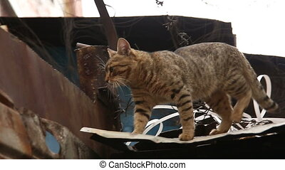 Cat on the roof of the prison with barbed wire