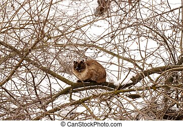 Cat on the snowy tree in winter