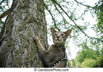 cat on the tree - oriental cat on the tree in the park