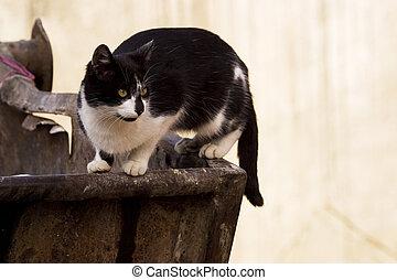 Cat on trash receptacle