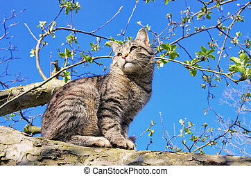 cat on tree 01
