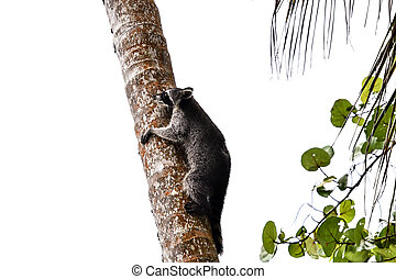 cat on tree, photo as a background