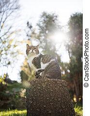 cat on tree stump in sunlight