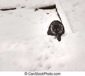 Cat outside on a snow