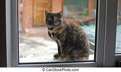 Cat Outside the Window - Cat outside the window want to...