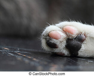 Cat Paw - Cat paw, close up