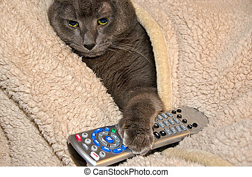 cat paw on tv remote