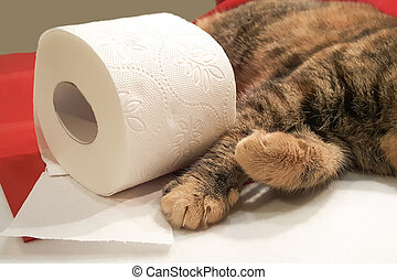 Cat paws and a toilet paper roll close-up.