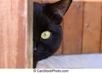 Cat peeping from behind a corner village house, yellow eye