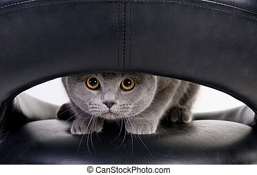 Cat peeping through the hole - Funny Scottish cat peeping...