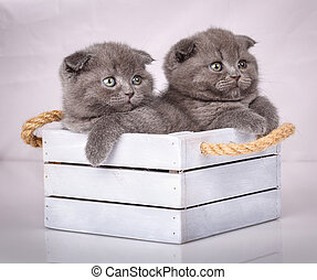Cat, pet, and cute concept - couple of cute cats in a wooden box.