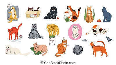 Cat pets vector illustration set. Cute kittens with different emotion sleeping, playing, stretching, hiding in box, washing itself. Funny kitties isolated on white background in simple flat style