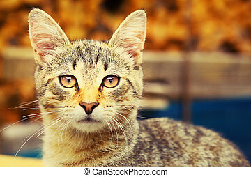 cat photo on summer country background