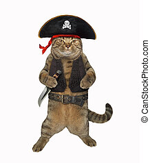 Cat pirate 1