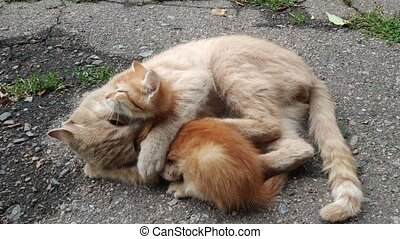 Cat playing with a little kitten