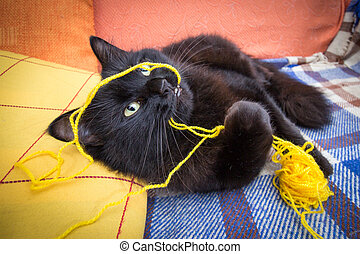 Cat playing with ball of yarn